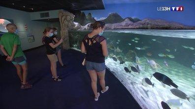 L'aquarium de La Rochelle rouvre ses portes