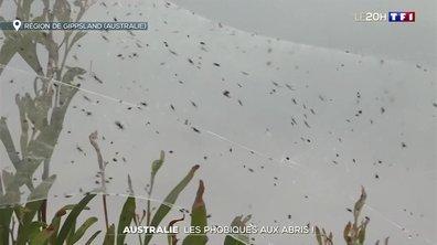 L'Australie confronté à une invasion de souris et d'araignées