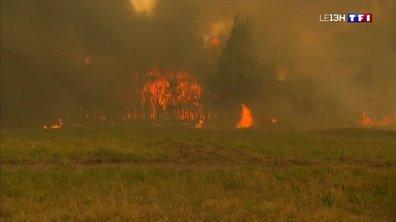 L'Australie ravagée par les feux