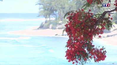 L'été austral s'installe à La Réunion