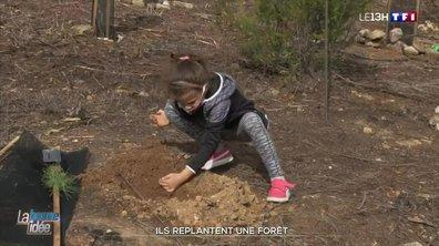 La bonne idée : une forêt incendiée des Alpes-Maritimes replantée par les élèves