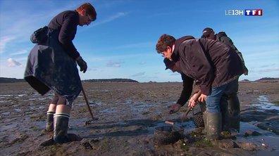 La Bretagne en automne (3/4) : la baie de Morlaix, un paradis pour les pêcheurs à pied