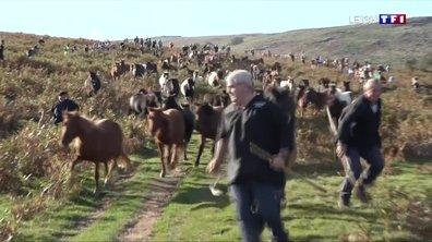 La fête du pottok, une tradition basque