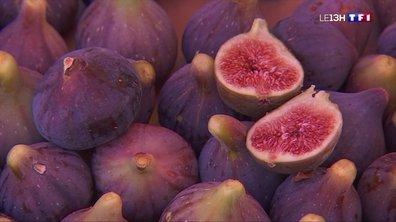 La figue, un délice sucré des Pyrénées-Orientales