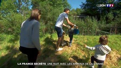 """""""La France secrète"""" : 24 heures au plus près des animaux de la savane"""