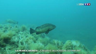 La France secrète : à la découverte de la réserve naturelle marine de Cerbère-Banyuls