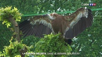 La France secrète à moins de 100 km de chez vous : le lac Léman et l'aigle Victor