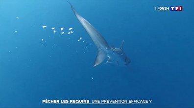 La pêche des requins à La Réunion : une prévention efficace ?