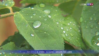 La pluie, de retour à Montpellier