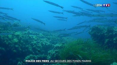 La police des mers au secours des herbiers de posidonie de Méditerranée