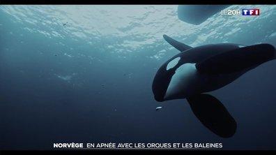"""""""La quête du sauvage"""" : l'apnéiste Morgan Bourc'his nous entraîne dans les eaux norvégiennes"""