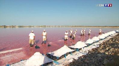 La récolte de la fleur de sel débute à Aigues-Mortes
