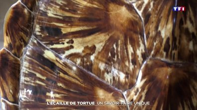 La Réunion : à la rencontre de l'un des derniers spécialistes de la carapace de tortue