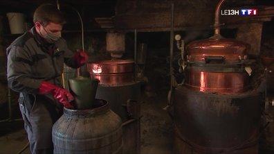 La saison de la distillation des fruits