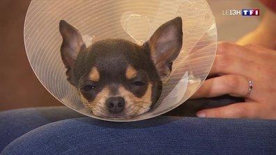 La télémédecine, en passe de devenir un quotidien pour les vétérinaires ?