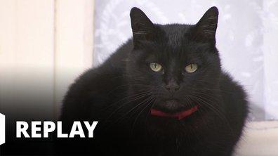 La vie secrète des chats - Dans la peau du chat