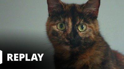 La vie secrète des chats - Entrechats avec Patrick Dupond
