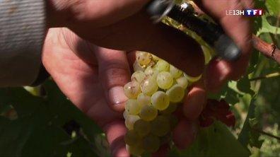 Lachassagne : des vins magnifiques à goûter au printemps