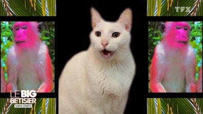 Le big bêtisier 100 % chats - Episode 1