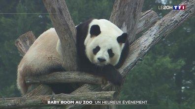 Le business des naissances dans les zoos