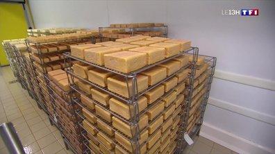Le département de l'Aisne vient en aide aux producteurs de maroilles