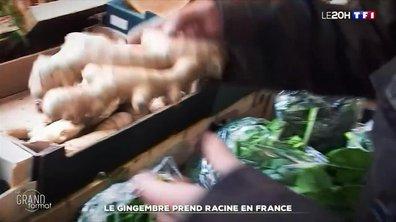 Le gingembre prend racine en France