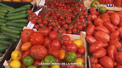 Le goût perdu de la tomate