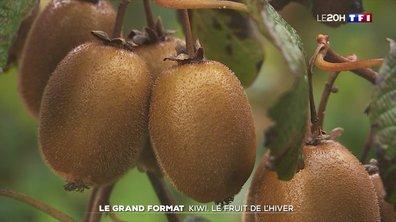 Le grand format : kiwi, le fruit de l'hiver