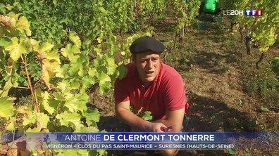 Le grand format : la Bretagne et l'Île-de-France sont-elles de nouvelles terres de vignerons ?