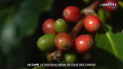 Le grand format : le café à la conquête du marché chinois