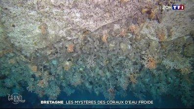 Le grand format : les mystères des coraux d'eau froide en Bretagne