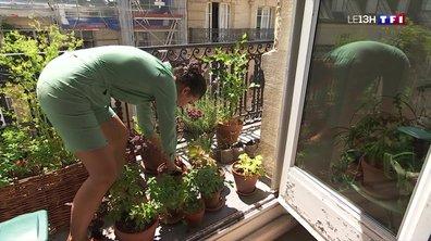 Le jardinage, une activité gratuite même en ville