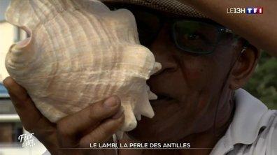 Le lambi, la perle de la Martinique