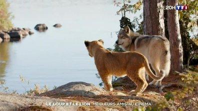 """""""Le loup et le lion"""", un couple inattendu à l'affiche"""