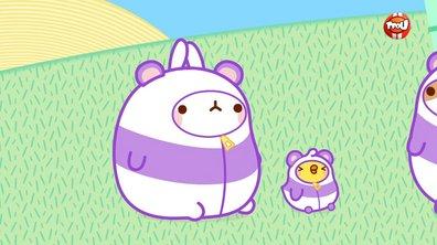Molang - Le panda