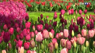 Le parc floral de Keukenhof, un coin de paradis néerlandais