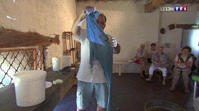 Le pastel, une plante qui fait la fierté des habitants de Lauragais