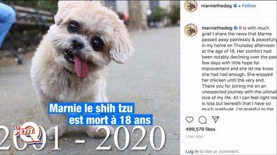 Le Petit Q : Marnie The Dog, star d'Instagram, n'est plus