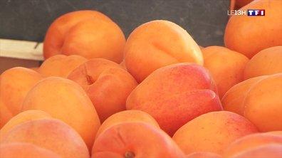 Les abricots arrivent sur les marchés