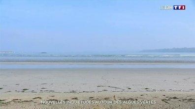 Les algues vertes à l'origine de la mort de deux chiens en Bretagne ?