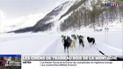 Les chiens de traîneau, rois de la montagne