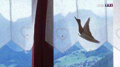 Les croyances locales (1/4) : la colombe du berger, gardienne de la vallée d'Abondance