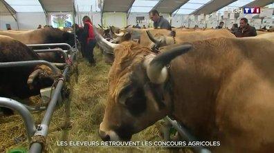 Les éleveurs retrouvent les concours agricoles dans le Puy-de-Dôme