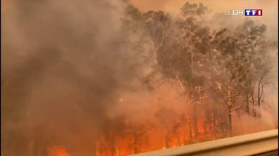 Les feux ravagent l'Australie