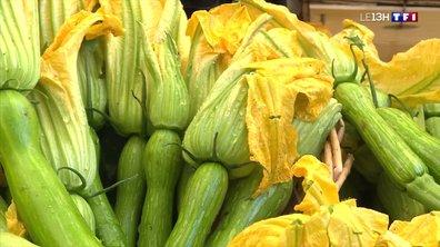 Les fleurs de courgette aux saveurs du Sud