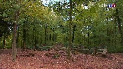 Les forêts de nos régions : à la découverte des arbres chargés d'histoire à Verdun