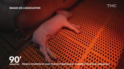 Les images chocs tournées par des militants vegan dans un élevage de porc