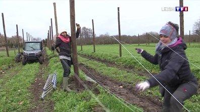 Les jardins potagers de Chambord reprennent vie
