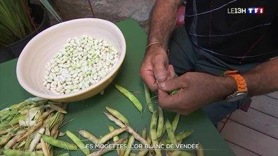 Les mogettes, l'or blanc de Vendée