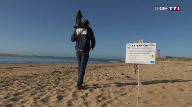 Les nids des gravelots en danger à cause du retour des touristes